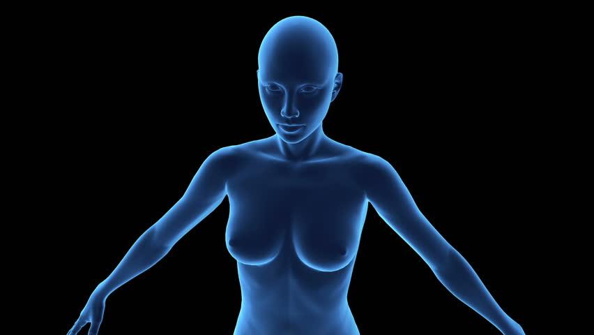 Camera moves closer to female anatomy model - HD stock video clip