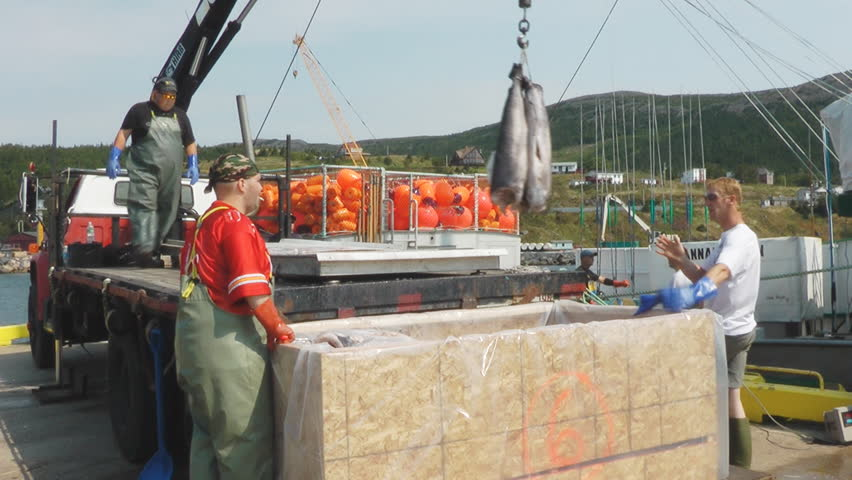 """BAY BULLS, NEWFOUNDLAND - SEPTEMBER 2010: Crew of the fishing boat Hannah Boden unload a catch of swordfish, this boat was featured on the Discovery t.v. show """"Swords Life On The Line""""."""
