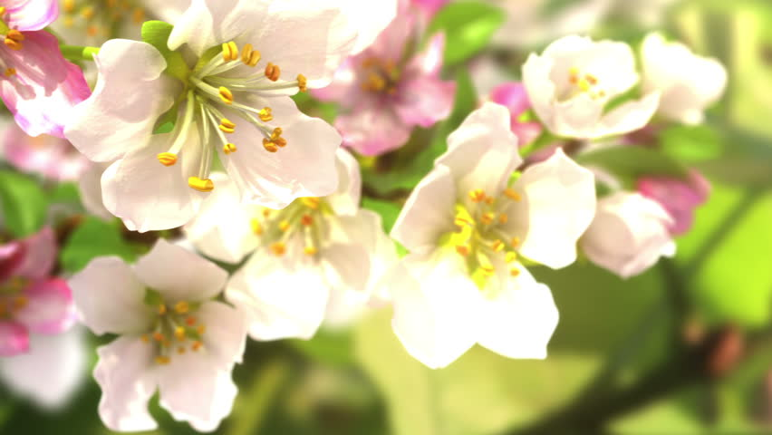 Soon the spring, beautiful 3d animation. see also the new version with butterflies ClipID 9191579 - HD stock video clip