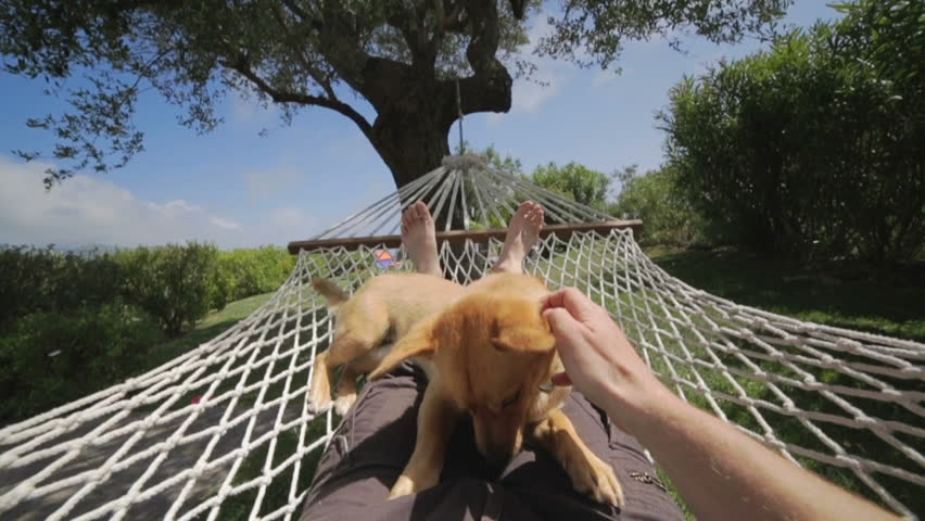 Owner of the dog swinging on the hammock above his owner on backyard