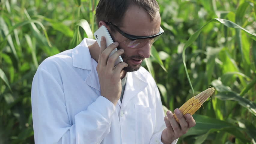 scientist talking on the phone and standing in the corn field