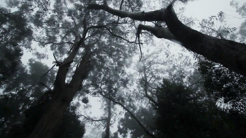 Long camera track through a dark forest