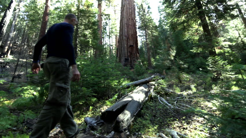 Romantic couple on vacation stroll together through the woods of Yosemite National Park and explore the famous giant sequoia trees. - HD stock video clip