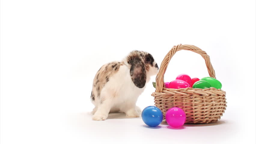 Bunny: Rabbit Sniffs Easter Eggs and Hops Off - HD stock video clip