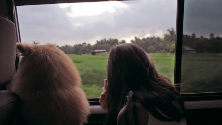 Dog and a girl watching a cloudy afternoon landscape from a window of a car. - HD stock video clip