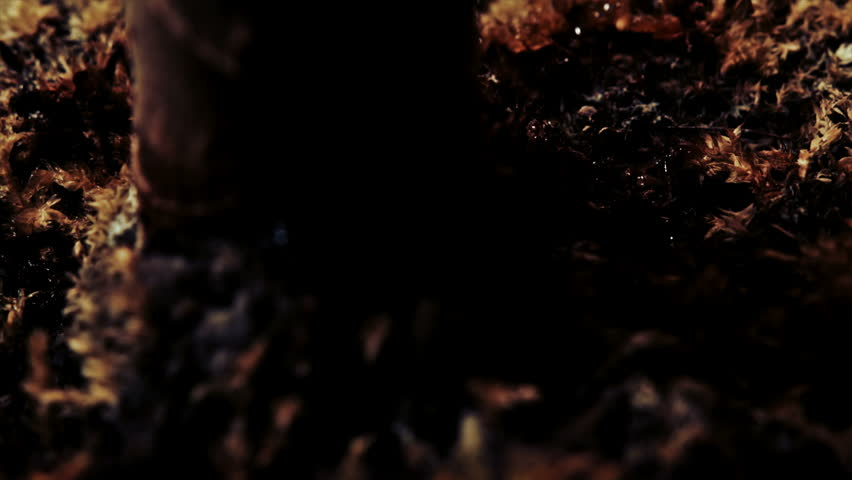 Soil in the base of plant pot close up UHD Stock Footage. A close up dolly shot of soil in a plant pot filmed on the Arri Alexa in Ultra High Definition.