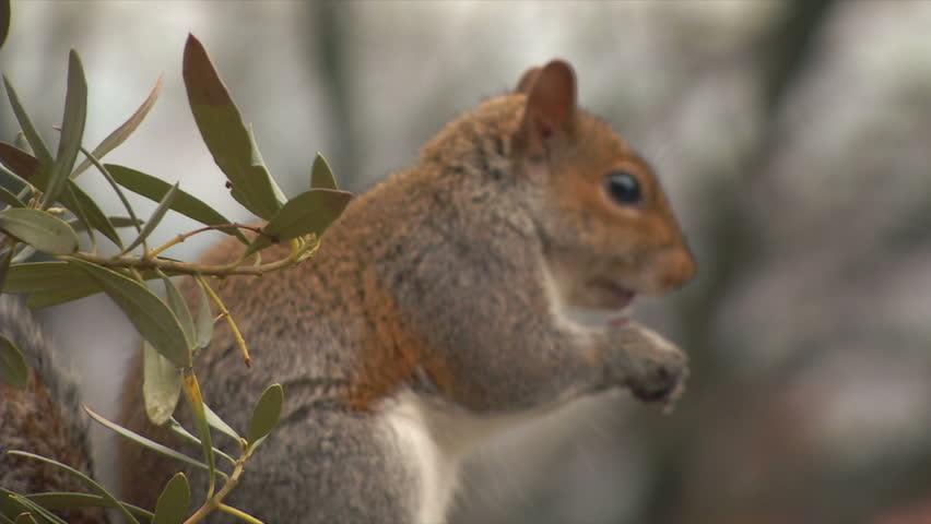 Squirrel Porn Videos  Pornhubcom