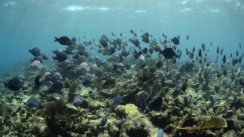 caribbean coral reef. - HD stock video clip