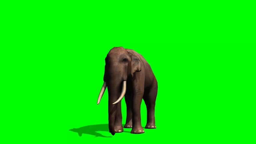 African Elephant eats - green screen | Shutterstock HD Video #5931551