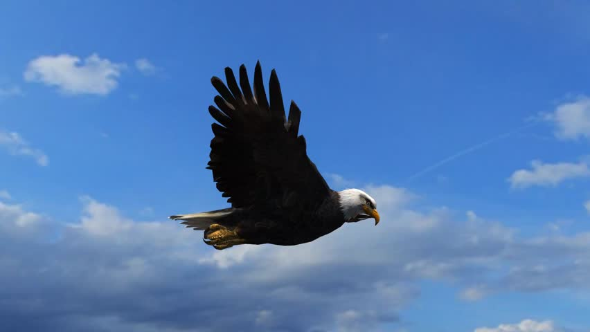 Bald Eagle Flight Close-Up tracking shot | Shutterstock HD Video #5993255