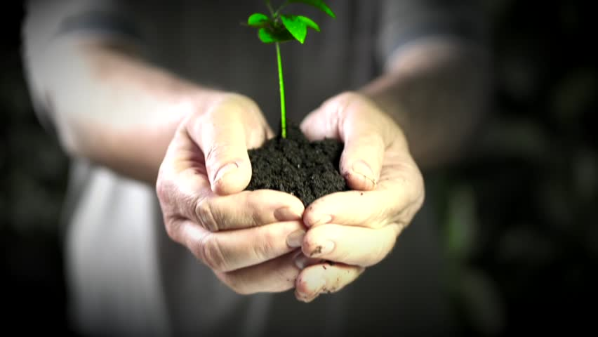 Small green tree in male hands. Concept and symbol of growth, care, protecting the Earth, ecology and green environment. - HD stock footage clip