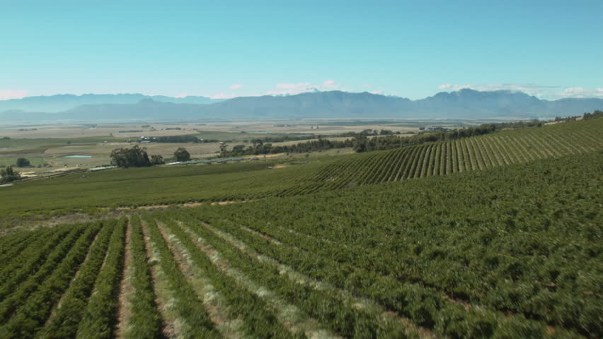 Sweeping aerial of vineyards in South Africa's Western Cape.