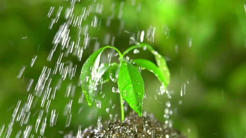 Green plant of mandarin tree under water drops.Rotation 360. Full HD slow motion 1080p