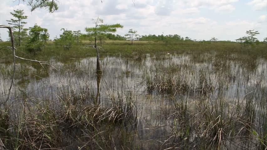 Pan across the Florida Everglades. - HD stock video clip