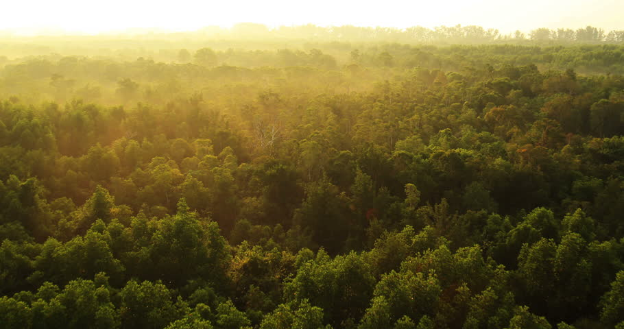 Aerial View: Flying birds. Mangrove forest in Krabi province, Thailand. February 2014. Krabi is southern province on Thailand's Andaman seaboard. The region derives much of its income from tourism. - HD stock footage clip