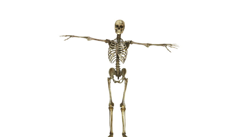 Dancing skeleton | Shutterstock HD Video #6144680