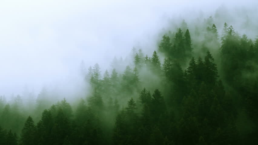 Misty mountain forest Fog blowing over mountain with pine tree forest. Symbolizing mysterious ways of nature with the eternal struggle between light and dark. Time-lapse shot on rainy day.
