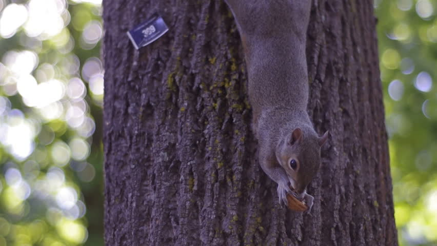 Squirrel eating a nut on a tree in a park
