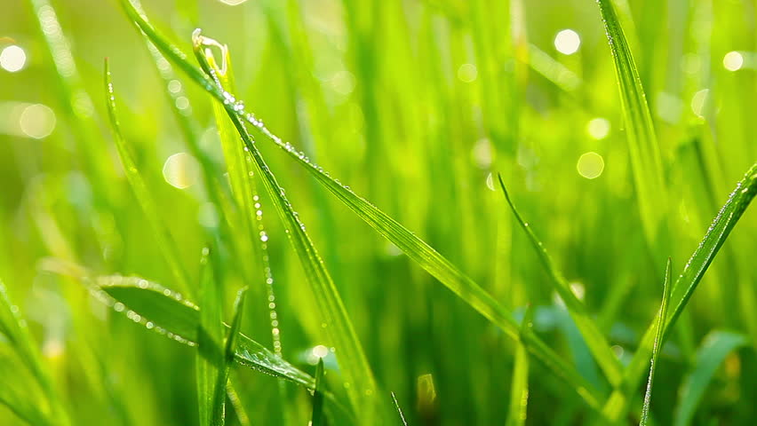 green grass and drops of morning dew - HD stock video clip