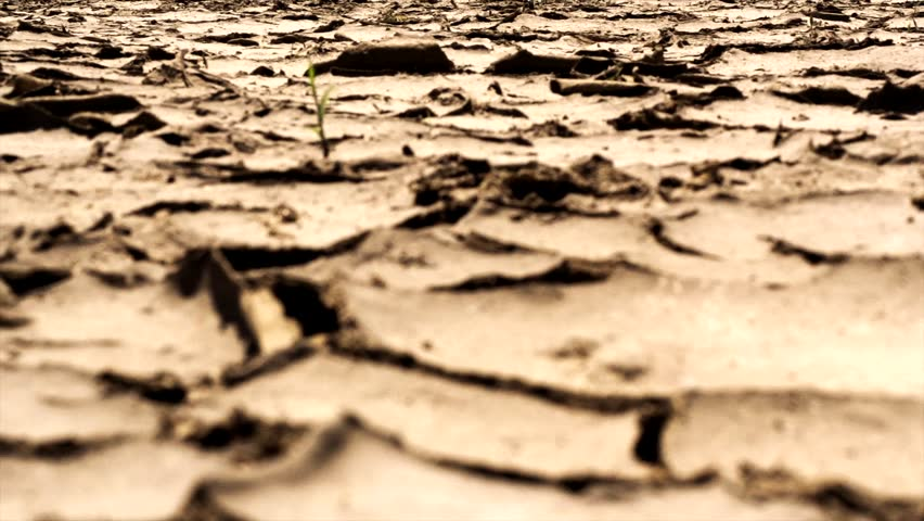 Barefoot Man Comes From The Camera On Dry Cracked Land Of Hot ...