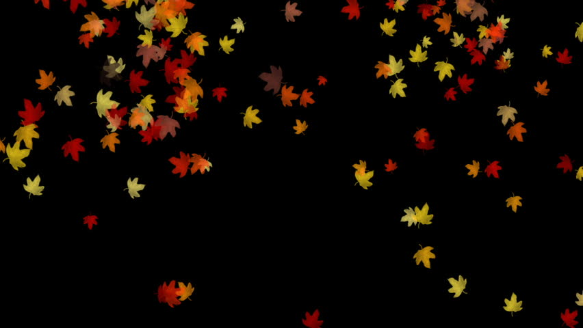 Falling Leaves background - HD stock footage clip