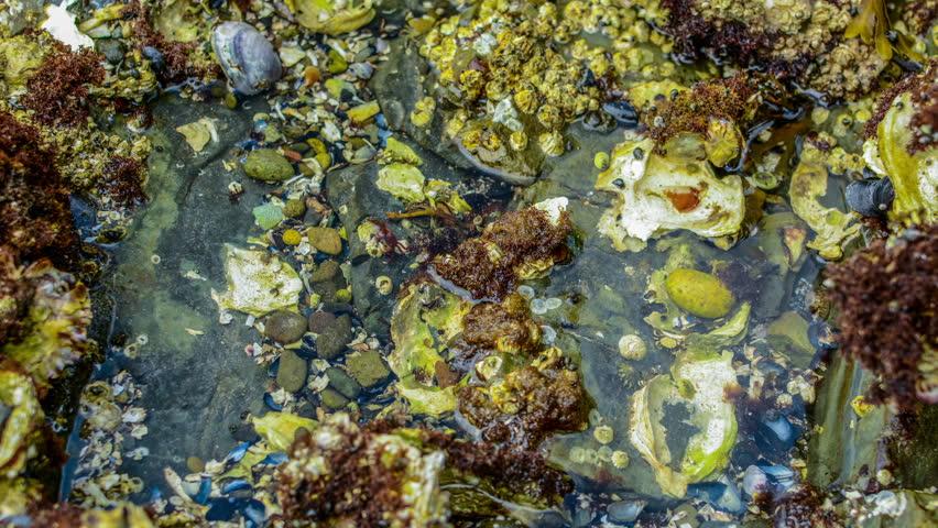 tide pools along beach, Seal Rock State Park, Oregon Coast ...  |Pacific Northwest Tide Pool