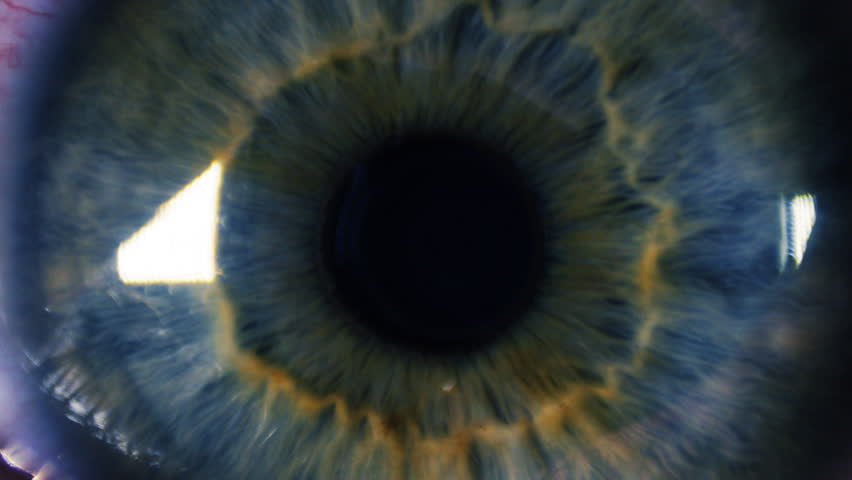 Eye iris and pupil macro