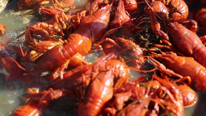 crayfish - HD stock video clip