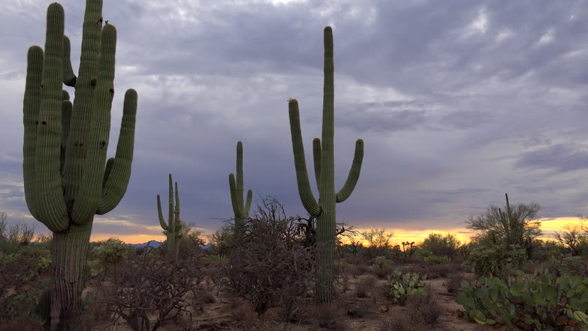 4K Time Lapse, Spectacular, fast moving storm clouds sweep across Tucson Arizona saguaro cactus desert landscape as yellow ball of sun sets, coloring sky beautiful blues, yellow, red. 4K UHD 3840x2160