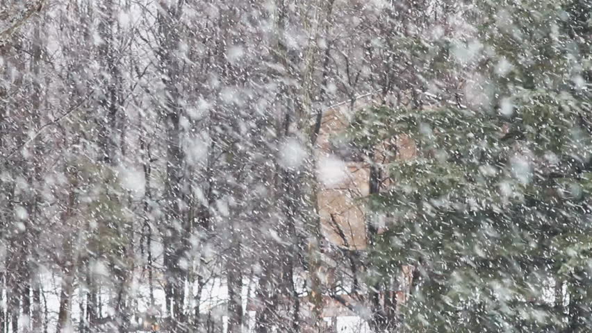 Heavy Snow Falling In A Wooded Area With A Small Cabin