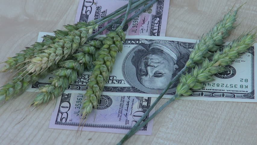 agriculture money business concept – rotate wheat ears and dollars