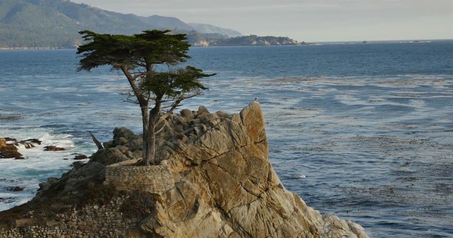 Lone Cypress 03 Sunset Ocean 17 Miles Drive Monterey California - 4K stock video clip