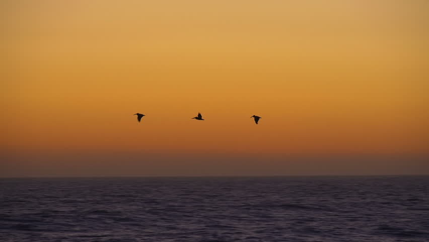 Three Pelicans Flying Over the Ocean At Sunset Slow Motion Oceanside California