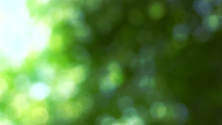 Nature background. Beautiful Sun shine through the blowing on wind tree green leaves. Blurred abstract bokeh with sun flare. Sunlight. Sunflare. Slow motion 240 fps. High Speed camera shot 1080p