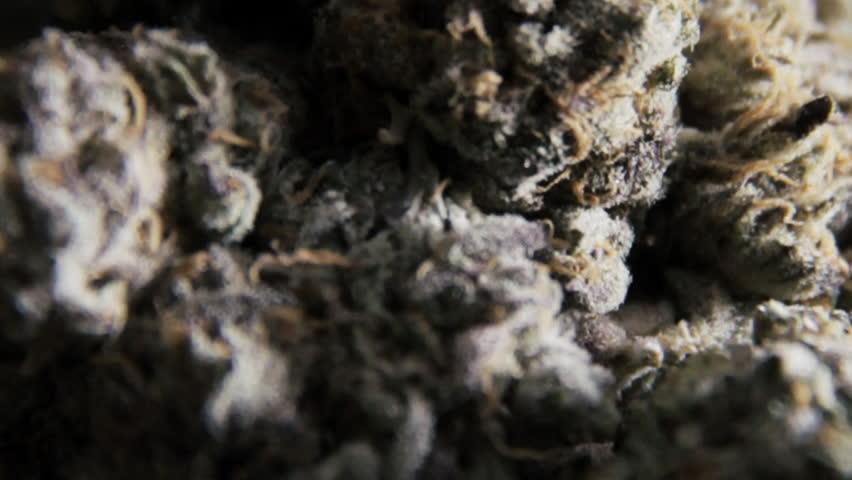 Marijuana Macro Close Up 4
