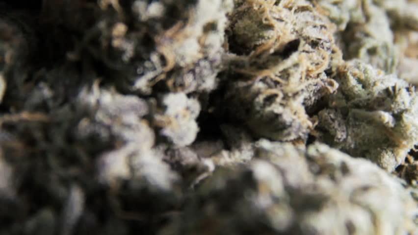 Marijuana Macro Close Up
