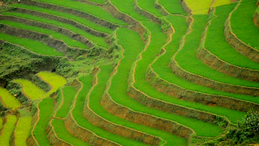 Zoom Out of Scenic Rice Farm Terraces in the Northern Mountains of Vietnam -  Sapa Vietnam