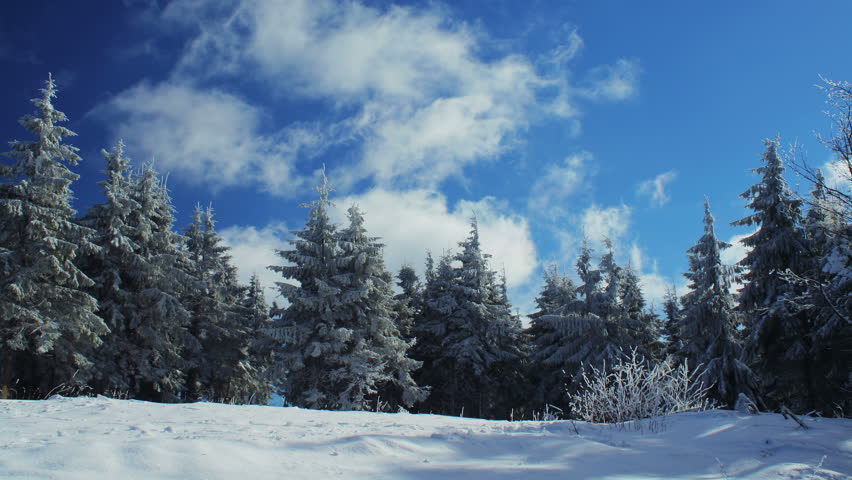 4K UHD. Timelapse of white clouds passing by winter forest. - 4K stock footage clip