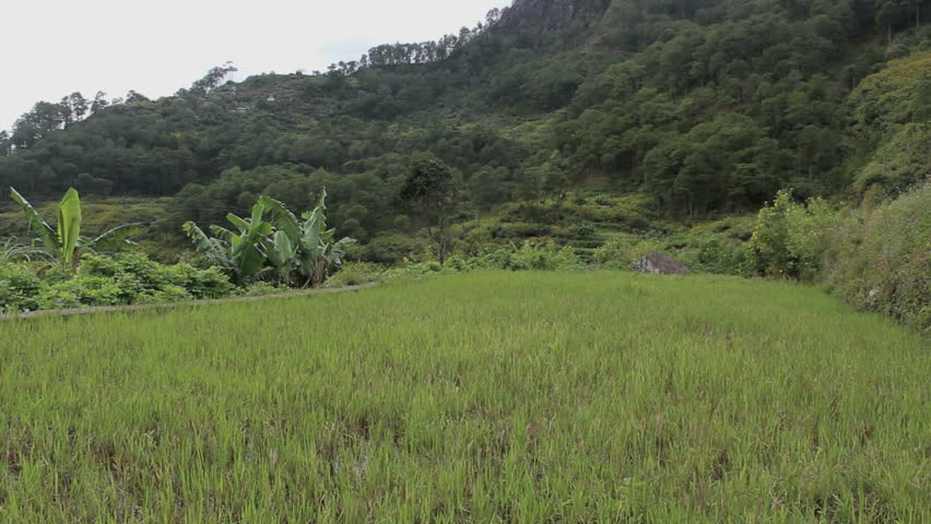 Rice field in the mountains