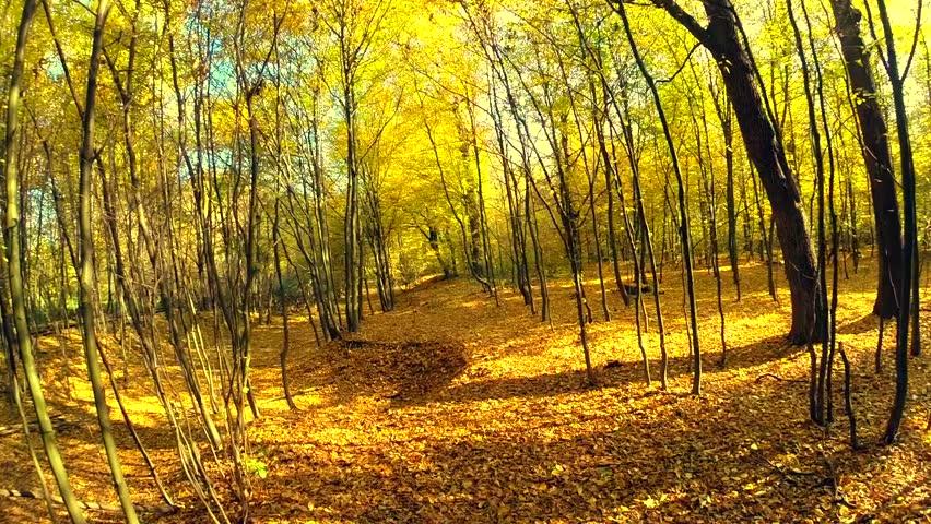 Trees Yellow Fall Blue Sky Sunny Fresh Air Season Nature Hd Wallpaper ...