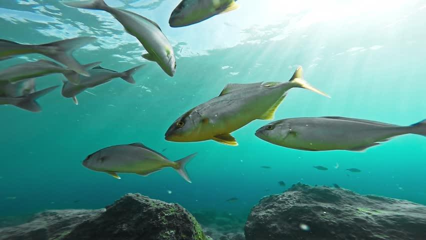 Coral Reef Fish Underwater Ocean Sea Life Wildlife School Marine Sunlight Rays Background Beauty Gopro HD - HD stock footage clip