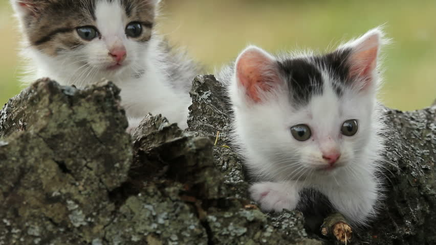 Kitten, a close up