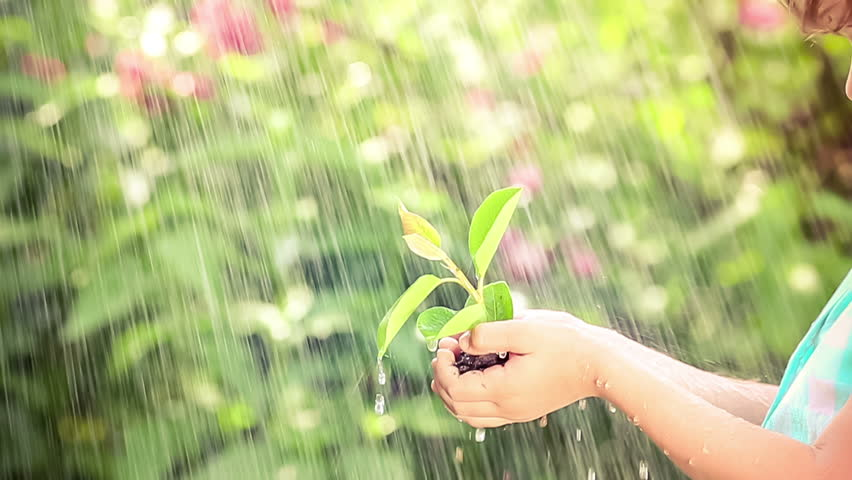 Young green plant in the rain. Child holding sprout in hands outdoors. Spring and new life concept. Earth day. Slow motion