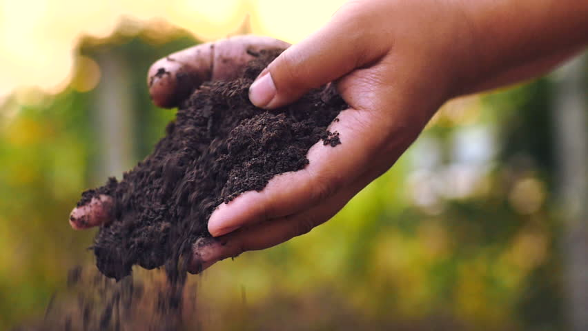 Soil, Agriculture, Sunlight,Slow motion, Farmer hands holding and pouring back organic soil on sunrise light