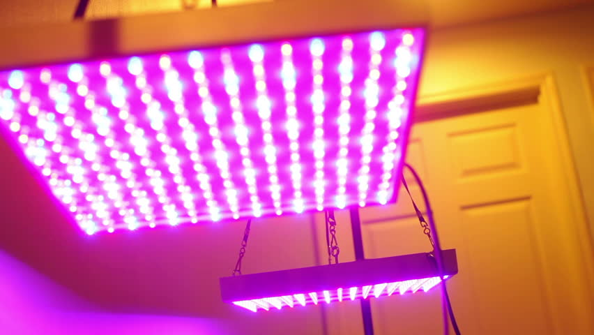 Uv Grow Lights For Growing Plants Stock Footage Video