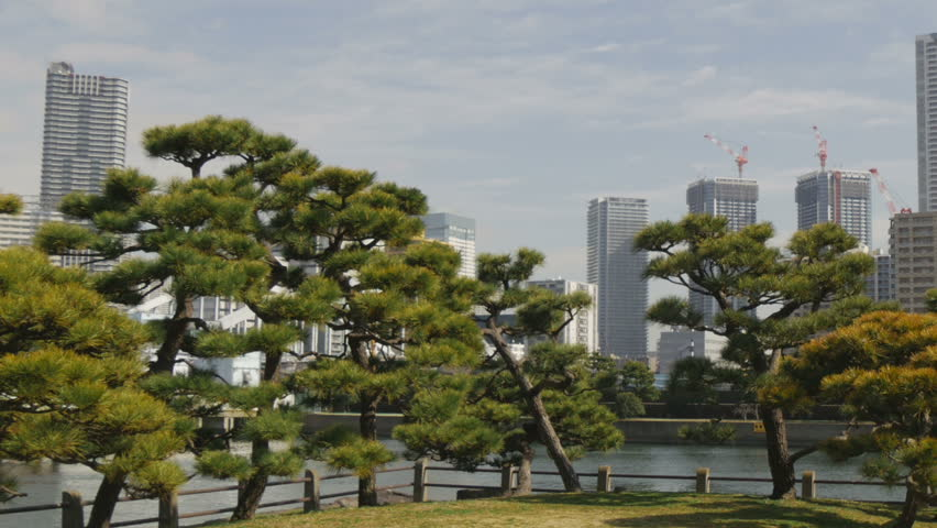 Pan view of beautiful pine trees and Tokyo horizon in the background. #9113096