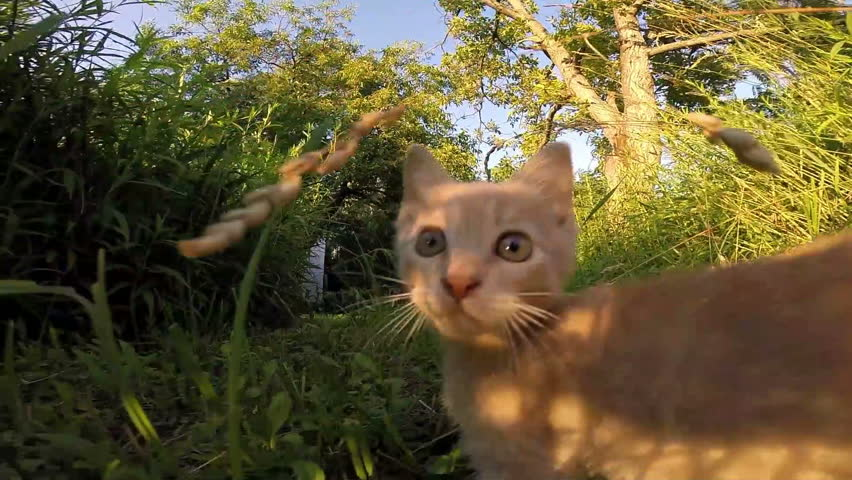 Funny Little cat playing hunting the camera