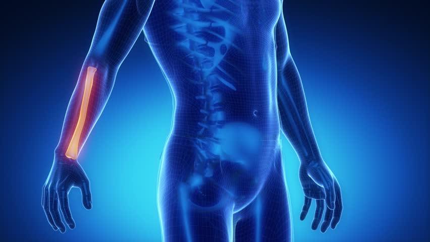 RADIUS bone skeleton x-ray scan in blue - 4K stock footage clip
