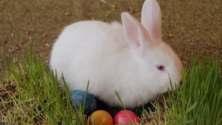 bunny rabbit sniffing around - photo #18