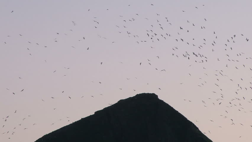 Very large flock of seagulls flying at coastal mountain peak, or double as a garbage dump.